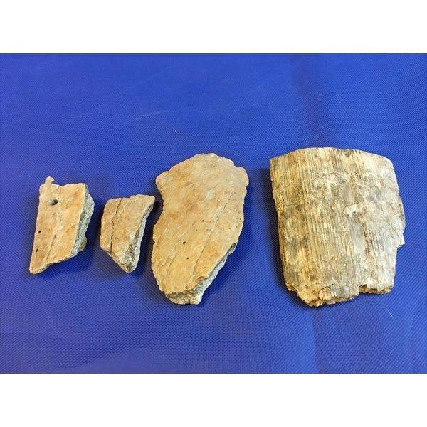 中古 マンモスの角1個 マンモスの骨4個 旧石器時代 実物 本物 a3