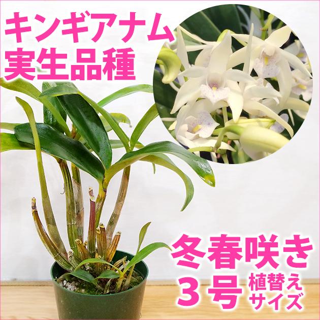 の 方 育て ラン 洋 胡蝶蘭の育て方・管理方法(温度・湿度管理)や胡蝶蘭に使う肥料とは