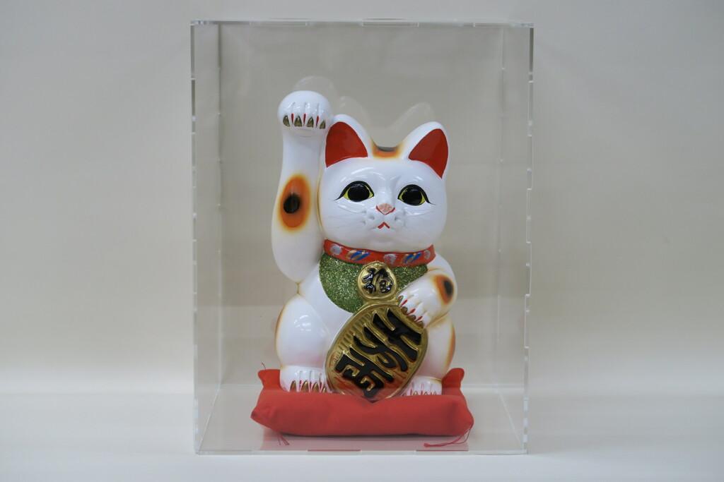8号招き猫小判白手長(座布団付) アクリルケースセット 組立て式
