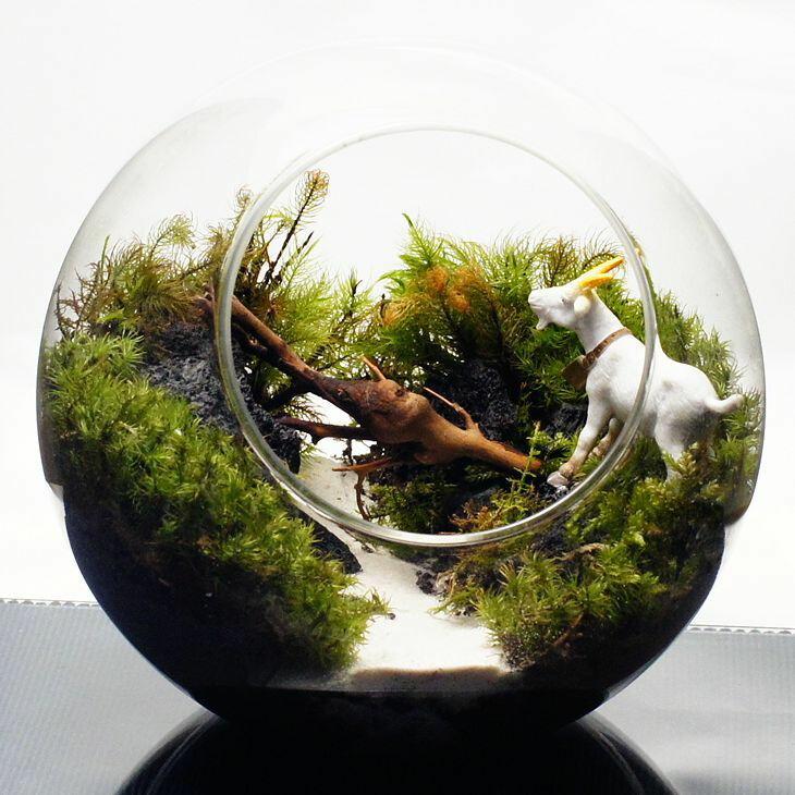 ガラスボトルの中に広がる絵本の中の世界 16cm ボトルテラリウム 苔テラリウム 完成品 苔盆景 テラリウム ヤギ ガラガラドン