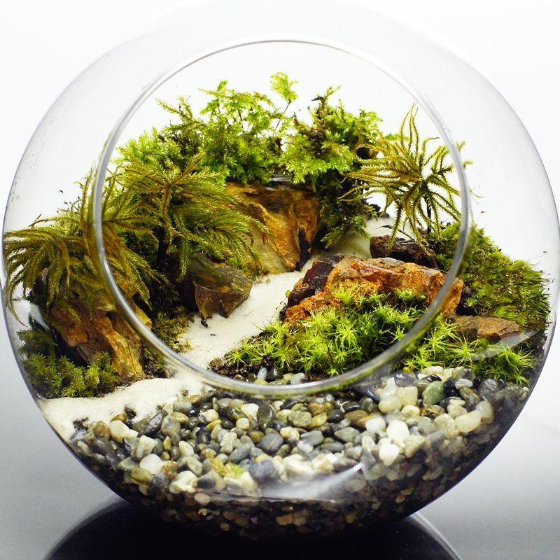 世界に一点だけの苔テラリウム プレゼントにも 16cm ボトルテラリウム 苔テラリウム 完成品 苔盆景 テラリウム 気孔石 自然の風景 砂利 和風