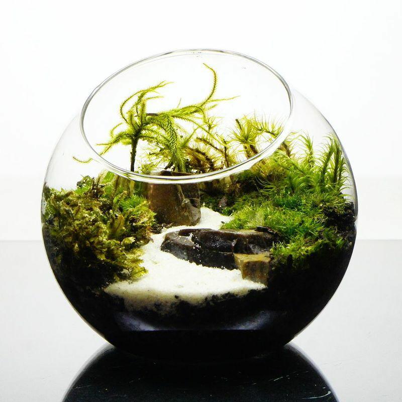 世界に一点だけの苔テラリウム プレゼントにも 10cm ガラスボトルテラリウム 苔テラリウム 完成品川が続く風景 苔盆景 テラリウム 木化石