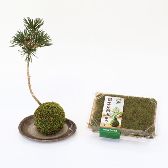 苔玉 保証 苔玉キット 苔 こけ 定番から日本未入荷 ハイゴケ コケ 富士の苔玉キット