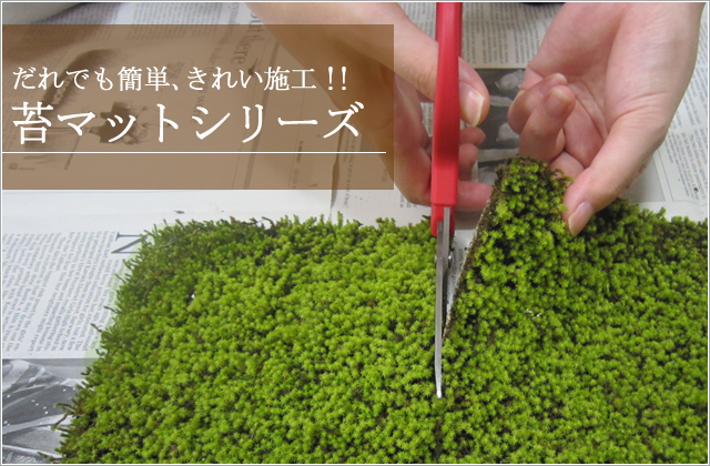 青苔青苔kokesunagoke沙子青苔