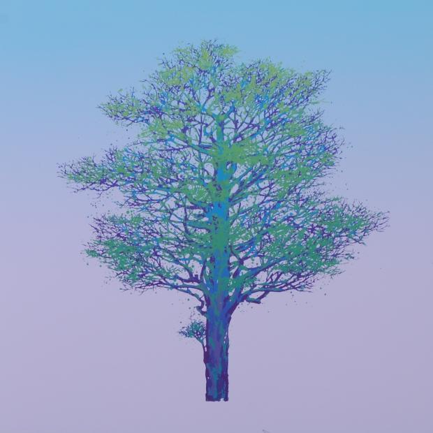 【作家名】池上壮豊 【作品名】樹-9
