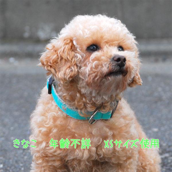 ドッグカラー 首輪 犬用 小型犬 マリンテイスト 3/4inch XS
