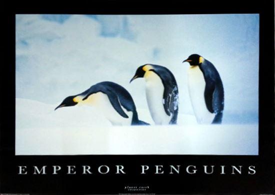 メーカー絶版処分特価 ペンギン PE-1025 国内送料無料 ポスター 即納