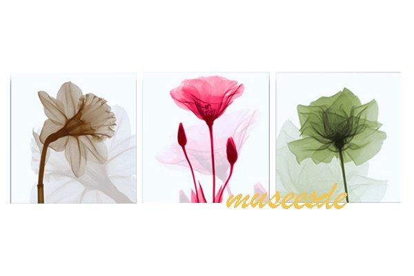 モダン アート 壁掛け印刷 ポスター フォトパネルインテリア 透明な花 アートパネルSteven N.Meyers レントゲン X線(X-Ray) 3枚セット PX1B027