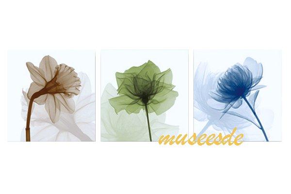 モダン アート 壁掛け印刷 ポスター フォトパネルインテリア 透明な花 アートパネルSteven N.Meyers レントゲン X線(X-Ray) 3枚セット PX1B028