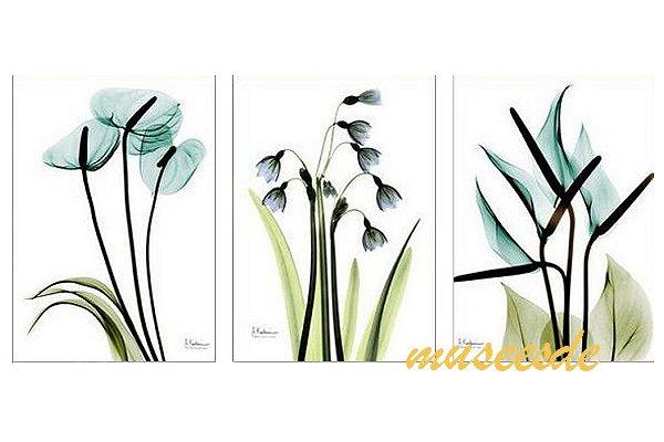 モダン アート 壁掛け印刷 ポスター フォトパネルインテリア 透明な花 アートパネルSteven N.Meyers レントゲン X線(X-Ray) 3枚セット PX1B032
