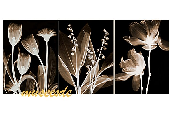 Flower art panel Steven N.Meyers X,rays X,rays (X,Ray) three pieces set  PX1B004 where modern art wall hangings print poster photo panel interior is