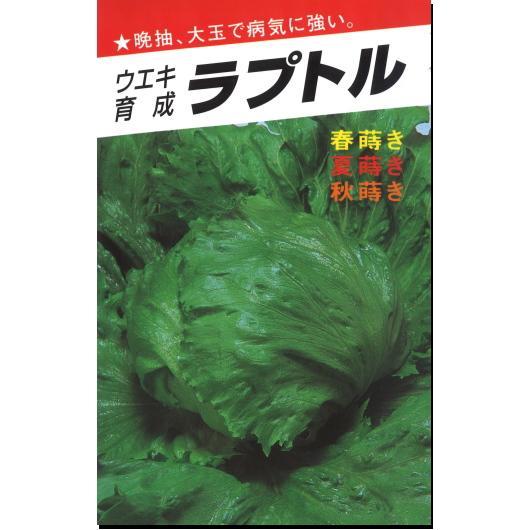 レタス 種子 ラプトル 結球レタス 20ml 【ラッキーシール対応】