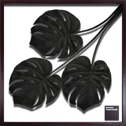 リーフフレーム IFF-51079 Monstera Deliciosa / Black サイズ(mm)625x625x30