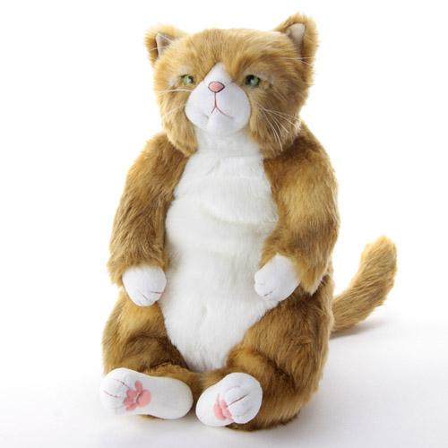Cuddly(カドリー)わさ美(Wasabi)ソメゴローの仲間にメス猫が加わりました!♪『Cuddly(カドリー)は抱きしめたいほどに可愛い!』