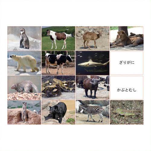 《DLM》 多目的言語カードセット動物編CD付KK0491 KK0491