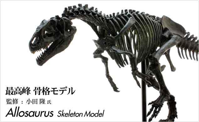 最高峰のディテールを誇る骨格モデル 恐竜 アロサウルス スケルトンモデル オンラインショップ 奉呈