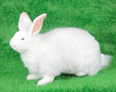 ハンサ【HANSA】リアルぬいぐるみ雪ウサギ 48cm