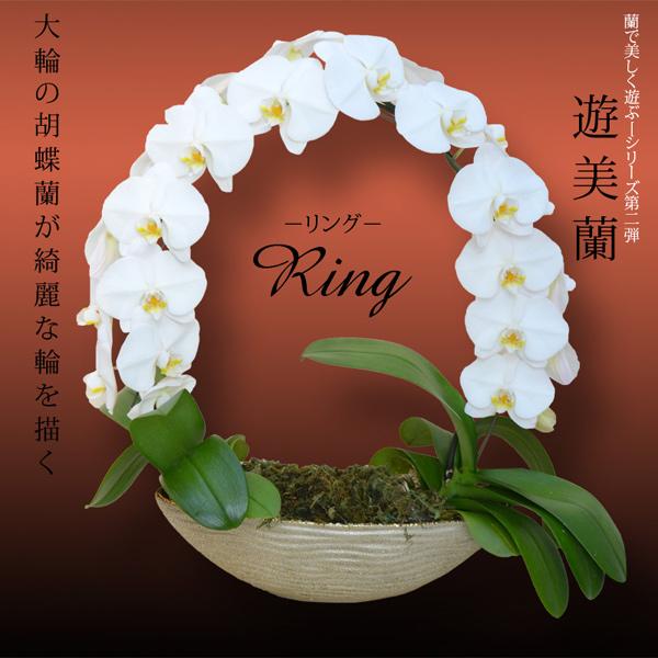 【送料無料】胡蝶蘭大輪『遊美蘭』リング◎02P01Oct16
