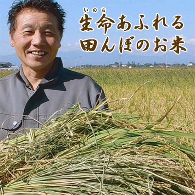 30年度産【生命あふれる田んぼのお米・白米20kg】(4kg×5袋)産地直送