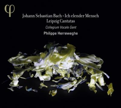 Phi 期間限定送料無料 バッハ 聖歌隊監督として 受注生産品 ~1723年から1724年へ フィリップ カンタータへ向かう4傑作~ ヘレヴェッヘ指揮 コラール