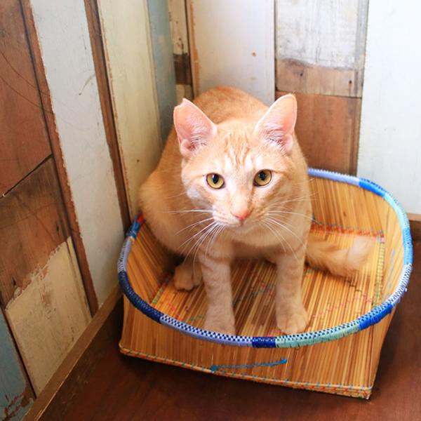 ロビバスケット 四角底 平大 縁カラフル かご カゴ ねこ ネコ