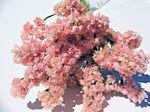 ハーバリウム アレンジ 数量限定 リース 壁掛け 半額 キャンドル アクセサリー ハンドメイ スターチス パピリオ ドライフラワー花材
