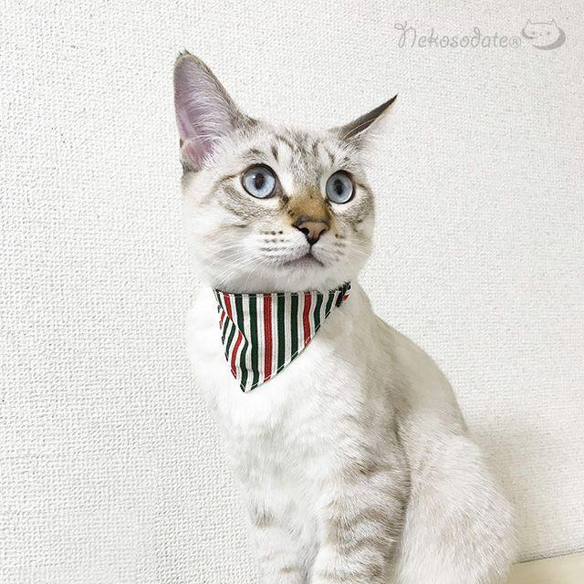猫の首輪 値引き ネコソダテ 軽量でつけ心地抜群の安全首輪 価格 首輪嫌いの猫様も安心 猫 首輪 安全 コットン製 ノエルストライプ柄 国産 バンダナ風セーフティ