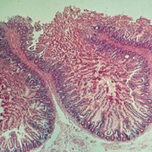 ケニス 解剖組織 プレパラート 20種類 各1枚 (1-157-0045) 人体の組織の構造を顕微鏡観察しよう!! ※お取り寄せ商品です。