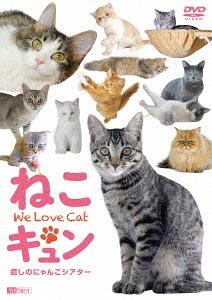 送料無料選択可 シンフォレストDVD ねこキュン 癒しのにゃんこシアター We 趣味教養 2020A W新作送料無料 Cat DVD Love 奉呈