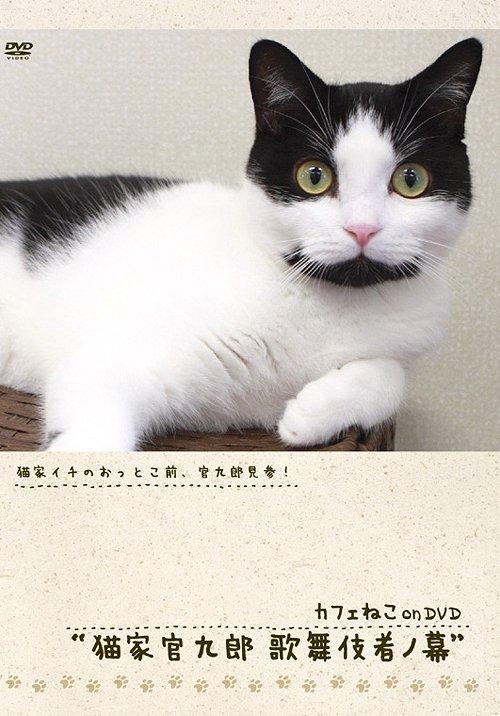 _ カフェねこonDVD 猫家官九郎 歌舞伎者ノ幕 / 趣味教養