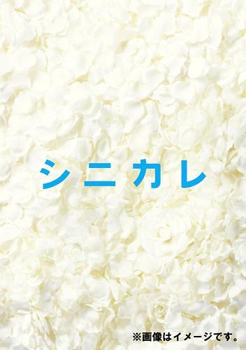 シニカレ 完全版 DVD-BOX / オリジナルV