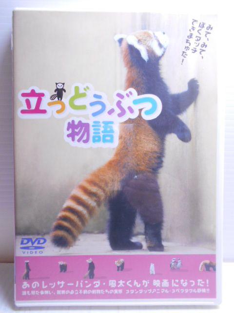 あのレッサーパンダ 風太くんが映画になった ZD34299 無料 DVD 立つどうぶつ物語 中古 送料無料激安祭