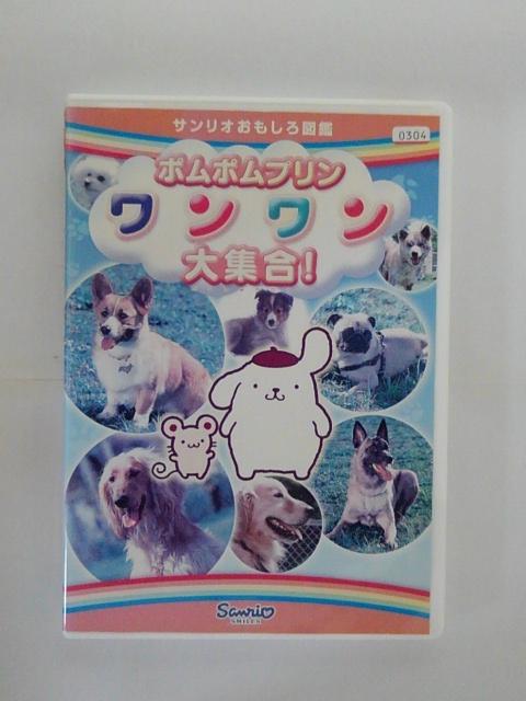 世界中のいろいろなイヌがたくさん登場 ZD35618 贈り物 激安セール 中古 DVD ポムポムプリンワンワン大集合