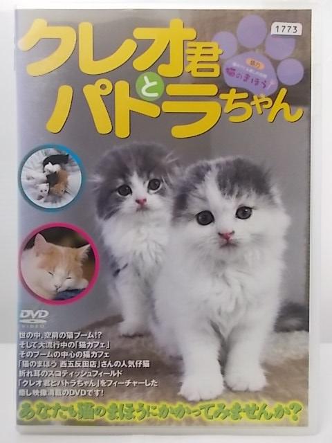 猫のまほうで癒されてみませんか? ZD36194 激安☆超特価 中古 クレオ君とパトラちゃんあなたも猫のまほうにかかってみませんか? 評判 DVD