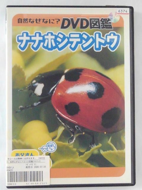 世界的昆虫カメラマン 栗林慧が5年の歳月をかけて昆虫たちの生態を完全収録したシリーズ第1弾 ZD42899 中古 贈答 自然なになに?DVD図鑑 オープニング 大放出セール DVD ナナホシテントウ