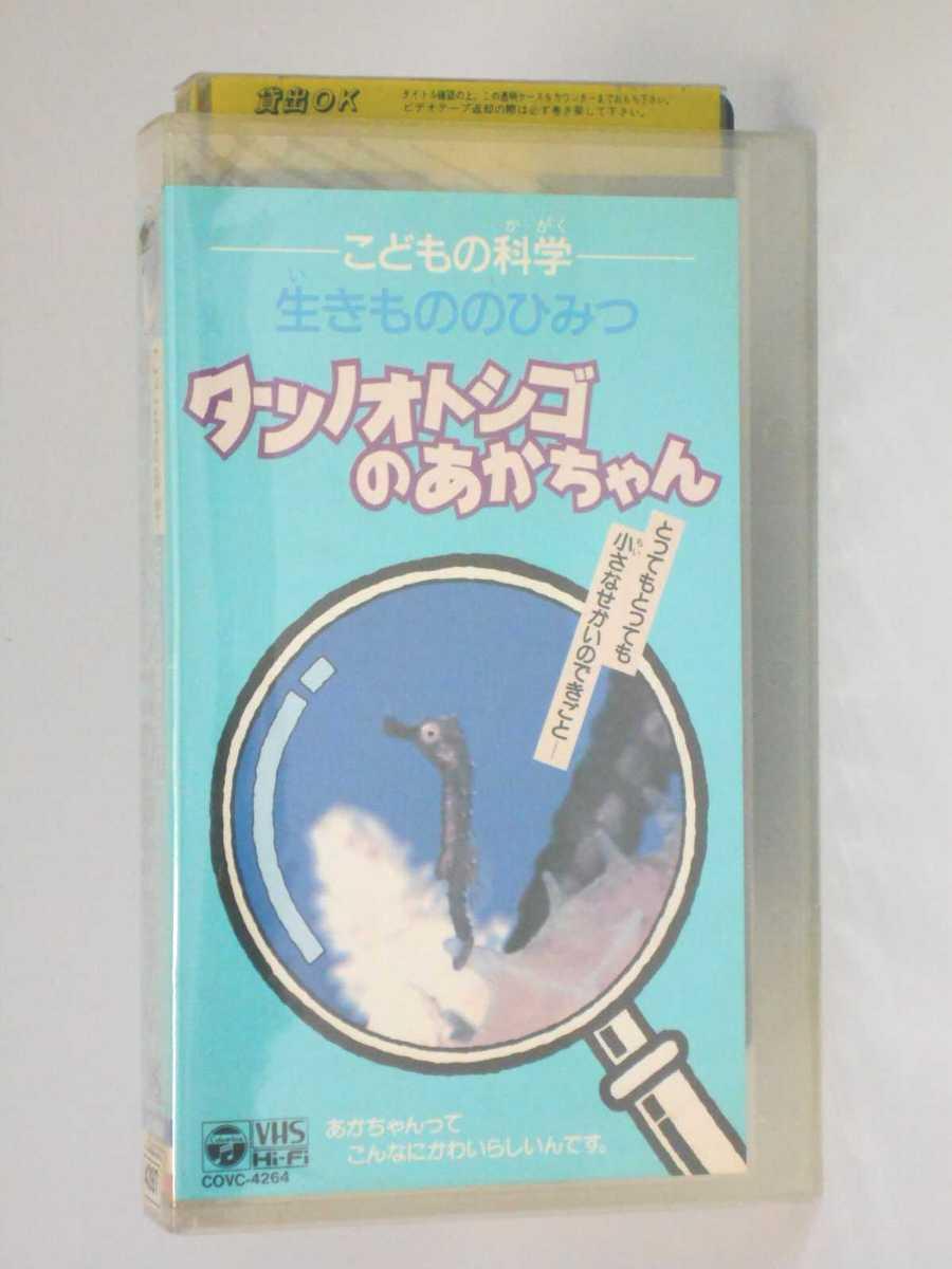 HV11362【中古】【VHSビデオ】こどもの科学 生きもののひみつ タツノオトシゴのあかちゃん