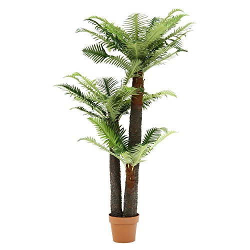 観葉植物 シダ 43/不二貿易/52678/4953980526786
