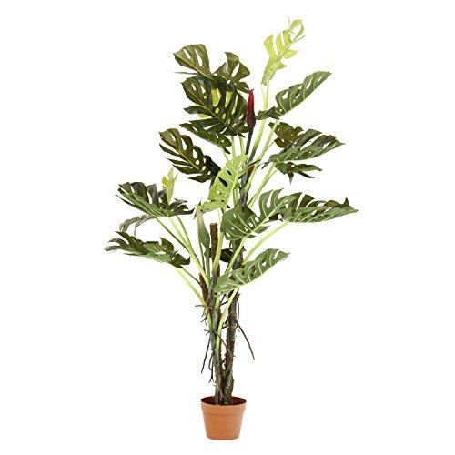 観葉植物 スプリット 22/不二貿易/52667/4953980526670