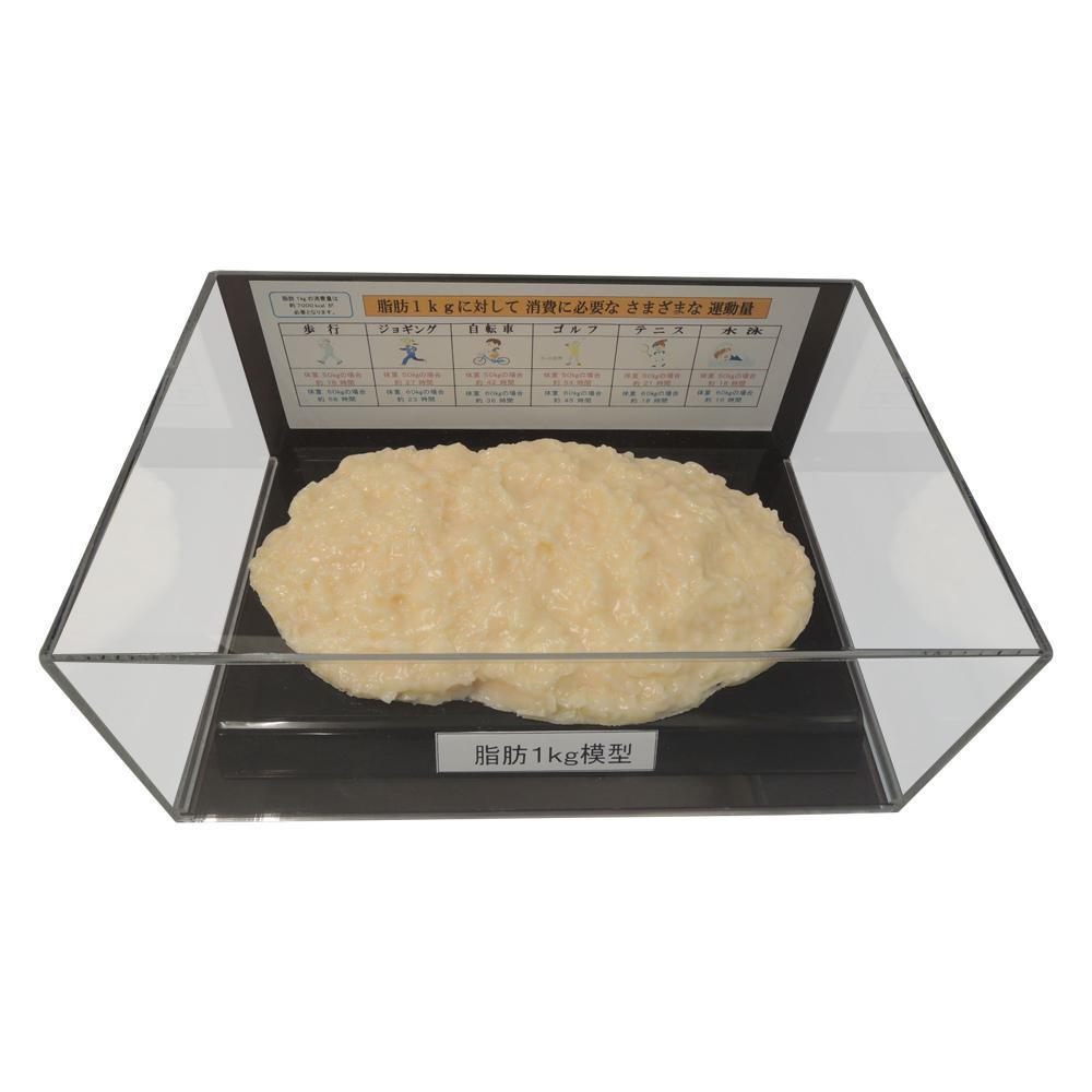 ●【送料無料】脂肪模型フィギュアケース入 1kg IP-978「他の商品と同梱不可/北海道、沖縄、離島別途送料」