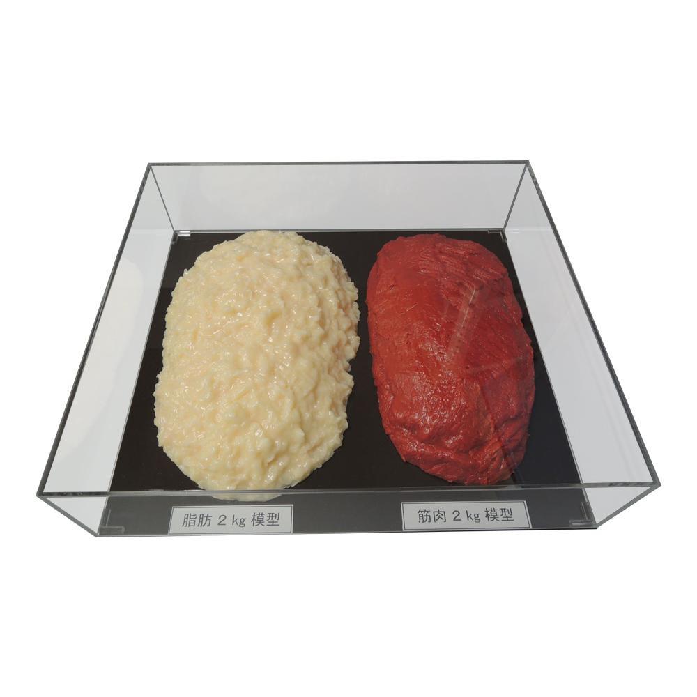 ●【送料無料】脂肪/筋肉対比セット(アクリルケース入)2kg IP-983「他の商品と同梱不可/北海道、沖縄、離島別途送料」