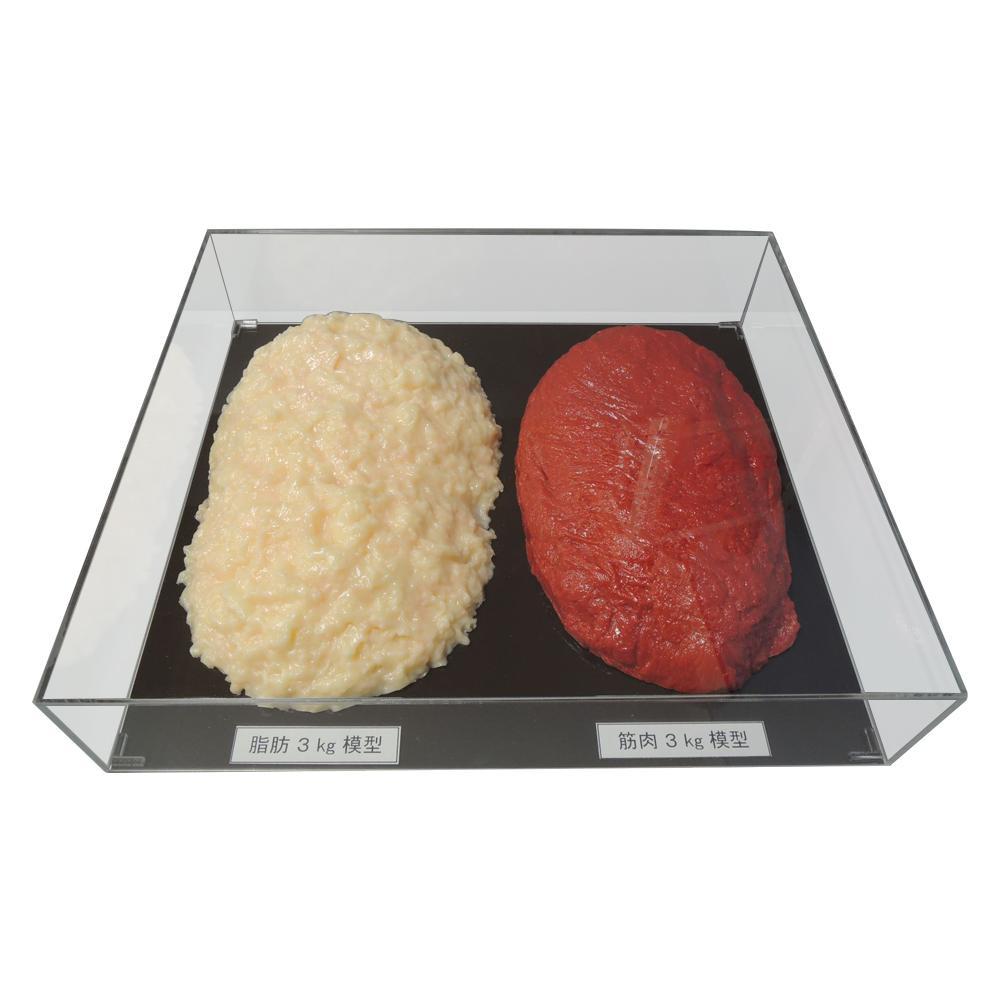 ●【送料無料】脂肪/筋肉対比セット(アクリルケース入)3kg IP-984「他の商品と同梱不可/北海道、沖縄、離島別途送料」