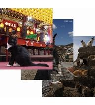 定番キャンバス 送料無料動物カメラマン 岩合光昭さんがかわいいネコたちをもとめて世界を歩きます 第3弾は 台湾 ポルトガル 25%OFF ブルーレイ 瀬戸内海のネコを撮影します 第3弾 全3枚セット 岩合光昭の世界ネコ歩き