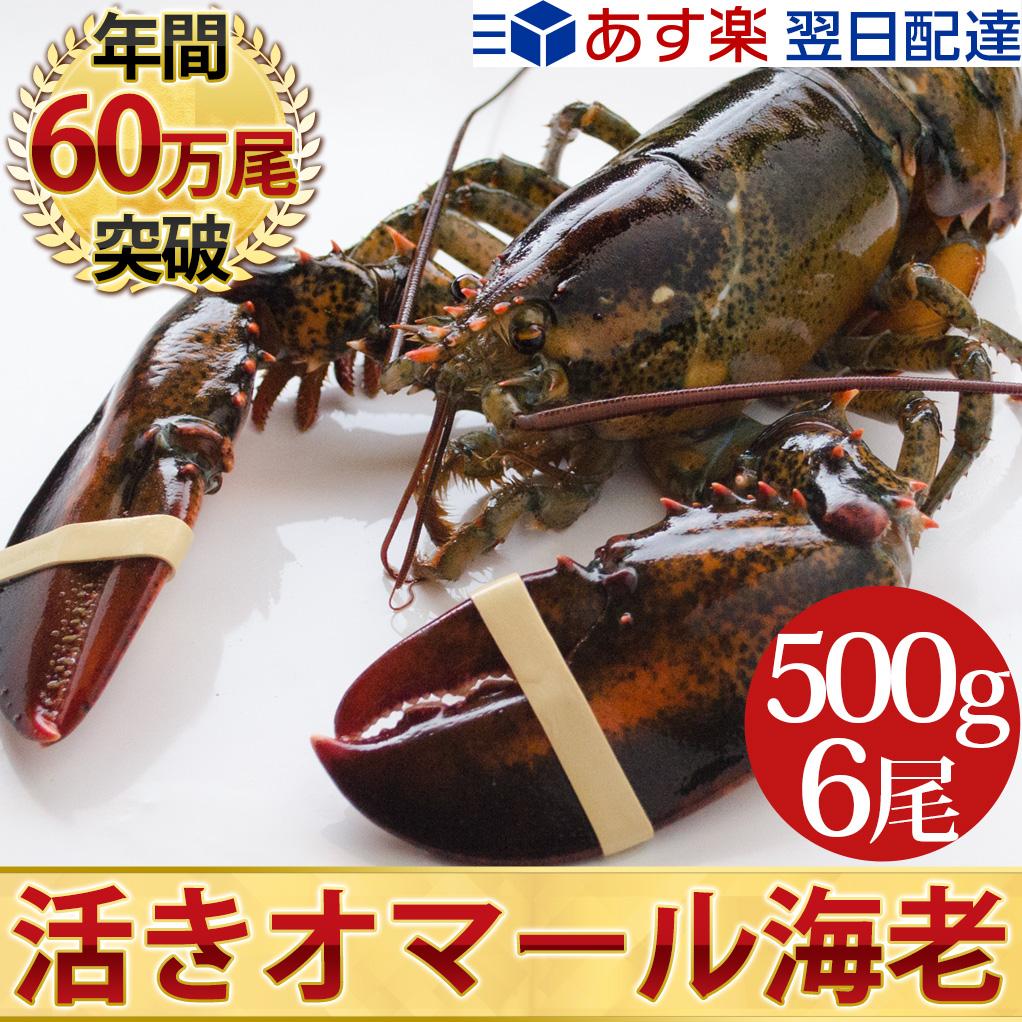 天然 活オマール海老(500g)6尾入BBQに!お歳暮ギフトにも最適送料無料!