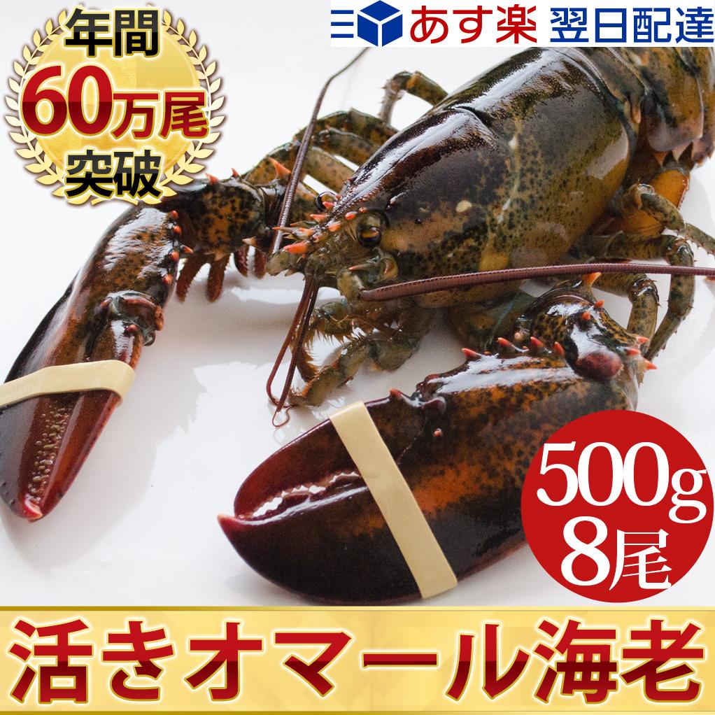 天然 活オマール海老(500g)8尾入BBQに!お歳暮ギフトにも最適送料無料!