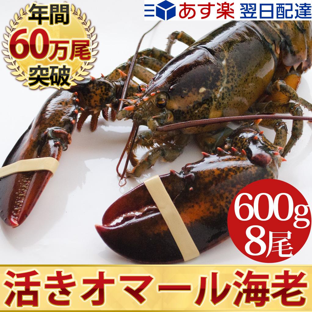 天然 活オマール海老(★特大600g)8尾入BBQに!お歳暮ギフトにも最適送料無料!