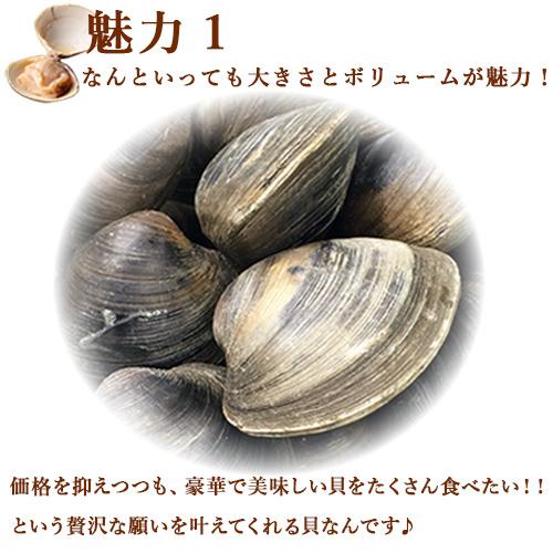 活きホンビノス貝・白はまぐり(サイズ無選別)3kg入BBQにも!ギフトにも最適!!