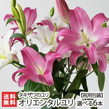 ユリの中でも特に人気 一つ一つが大きい花冠は存在感もビッグ 上品な香りを漂わせ 華やかな雰囲気を演出します 発送時期に最適な品種を厳選してお届けします お祝い用ラッピング オリエンタルユリ 白 ピンク 選べる6本 価格 タキザワのユリ 花 生花 後払い不可 鑑賞 プレゼント バーゲンセール 送料無料 切り花 新潟産 ゆり 国産 代金引換 贈り物 お祝い 切花 百合
