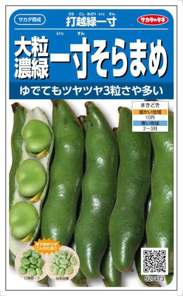 【種子】 サカタのタネ 大粒濃緑一寸そらまめ 打越緑一寸 28ml【郵送対応】【品種名:打越緑一寸】
