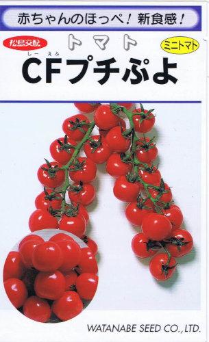 【種子】 渡辺採種場 トマト CFプチぷよ 生種 9粒 【郵送対応】