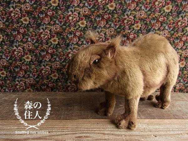 """水豚塞真正漢薩""""豚"""""""